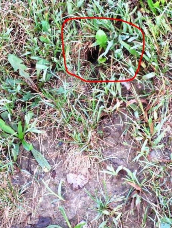 Nest showing hole
