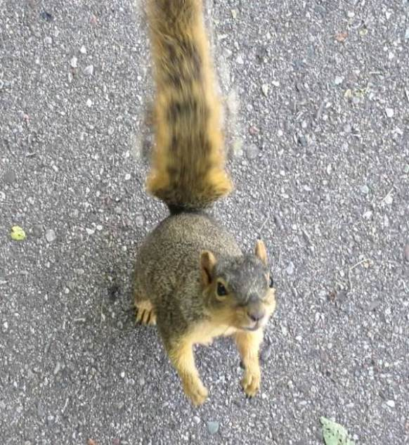 nuts please