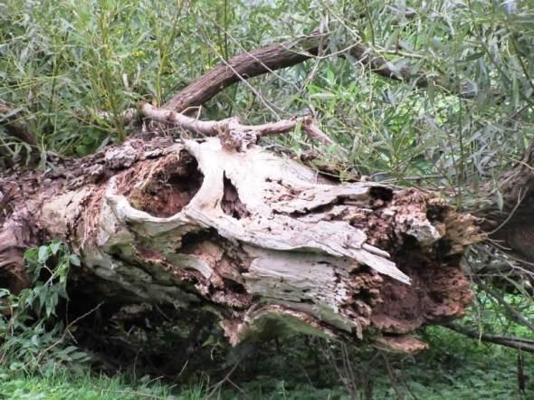 small tree head