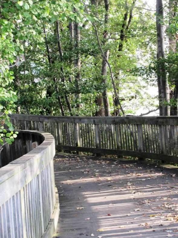 wooden walk1.jpg