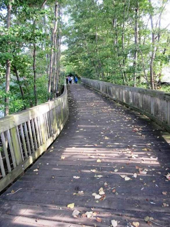 wooden walk2.jpg