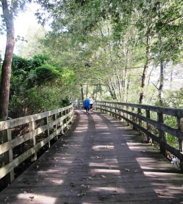 wooden walk3.jpg