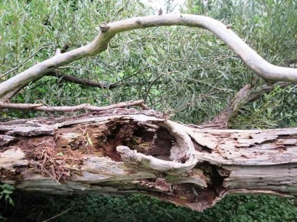 woodpeckers delight.jpg