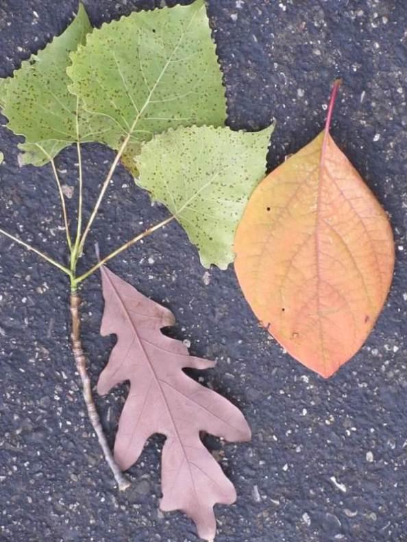 assorted leaves.jpg