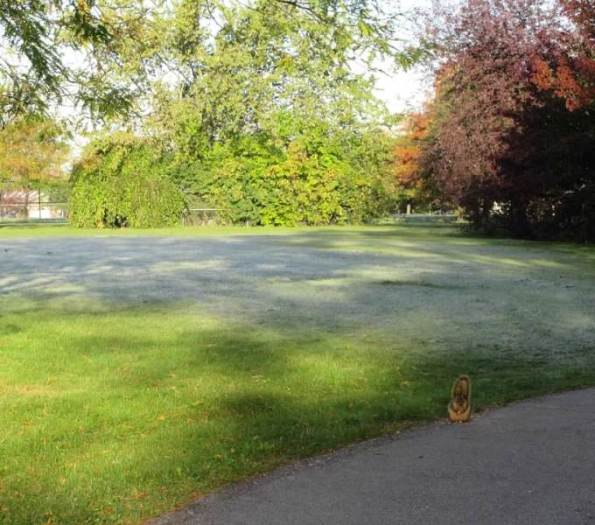 Frost with squirrel