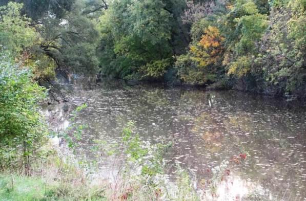 leaves on creek1jpg.jpg