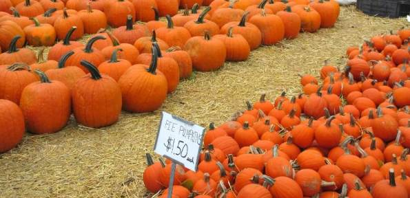 pumpkins miscellaneous.jpg