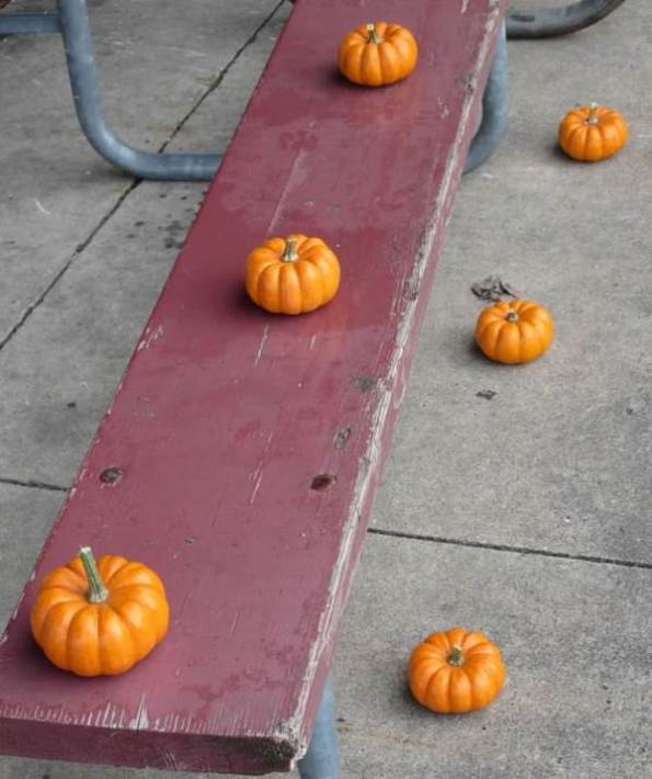 pumpkins on bench.jpg