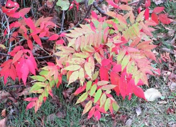 red leaves2.jpg