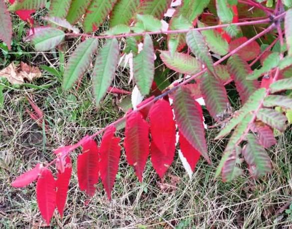 red leaves3.jpg