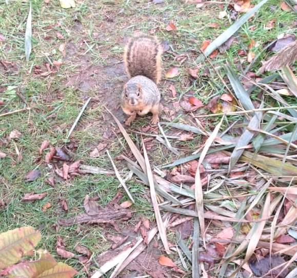 squirrel waiting for me - small