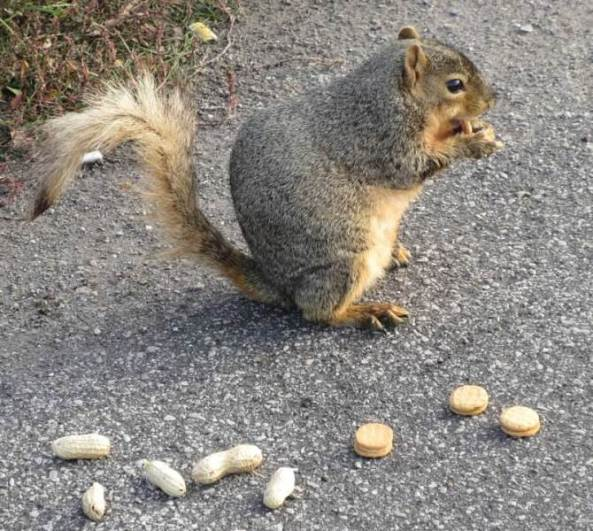 young squirrel.jpg