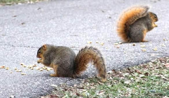 2 squirrels