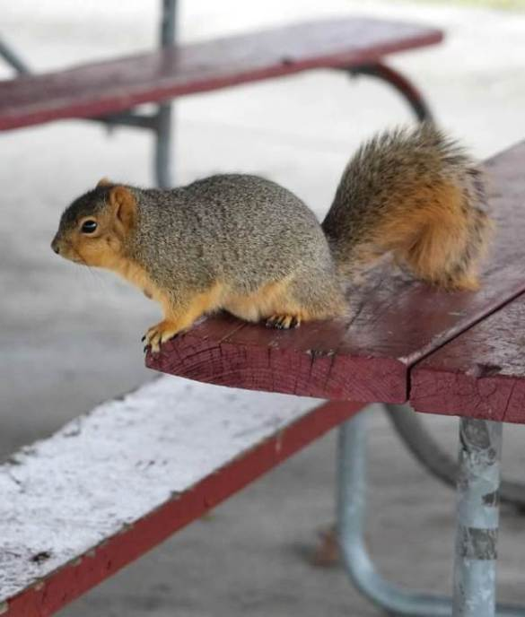 begging on picnic table1