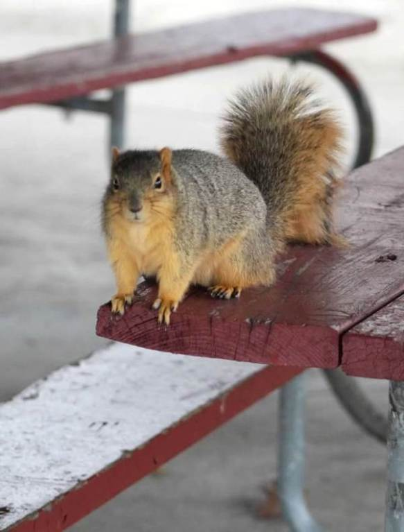 begging on picnic table2
