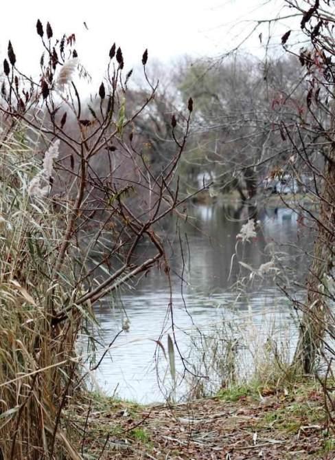 dead reeds.jpg