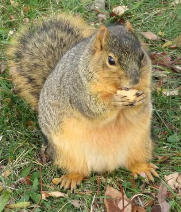 enjoying peanut cookie