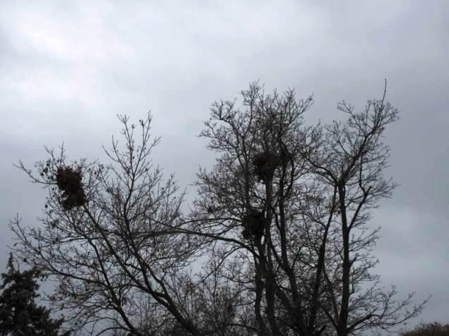 nest5-up high