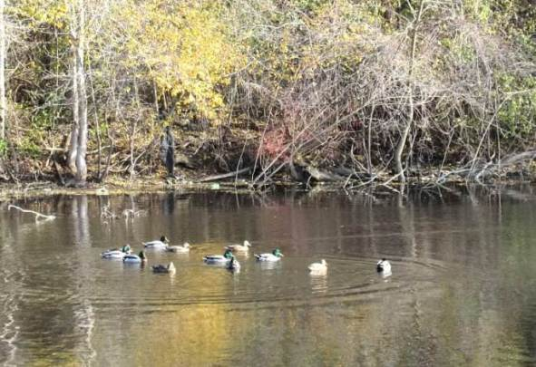 on golden pond1.jpg