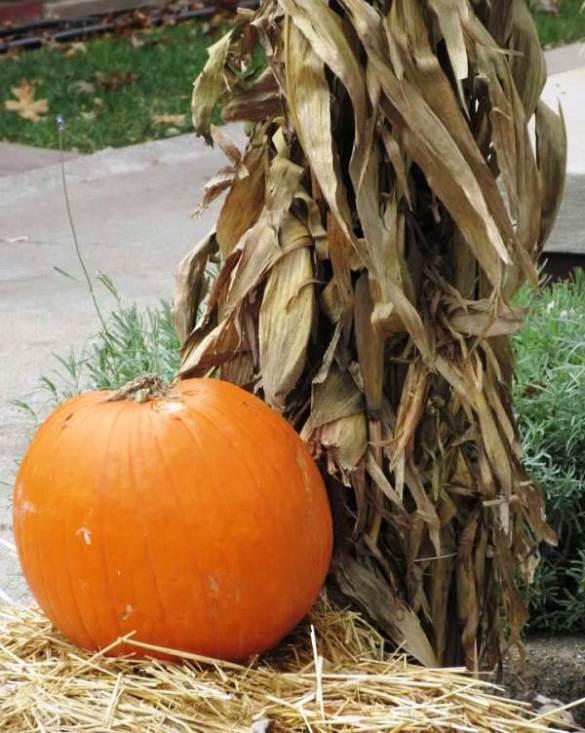 pumpkin solo on emmons.jpg