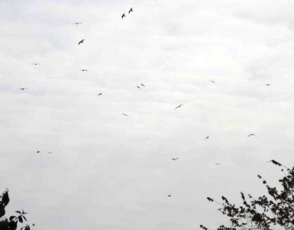 seagulls1.jpg