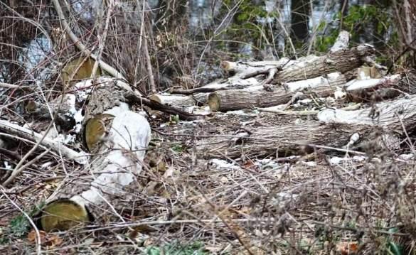 snow on stump1.jpg