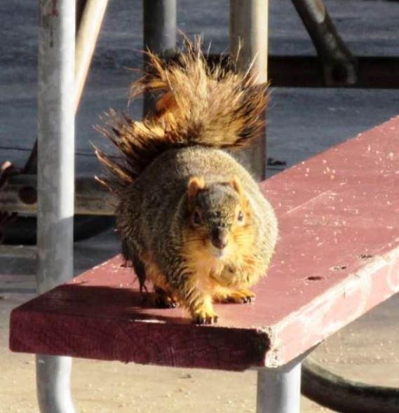 wet squirrel.jpg