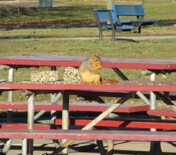 1 squirrel