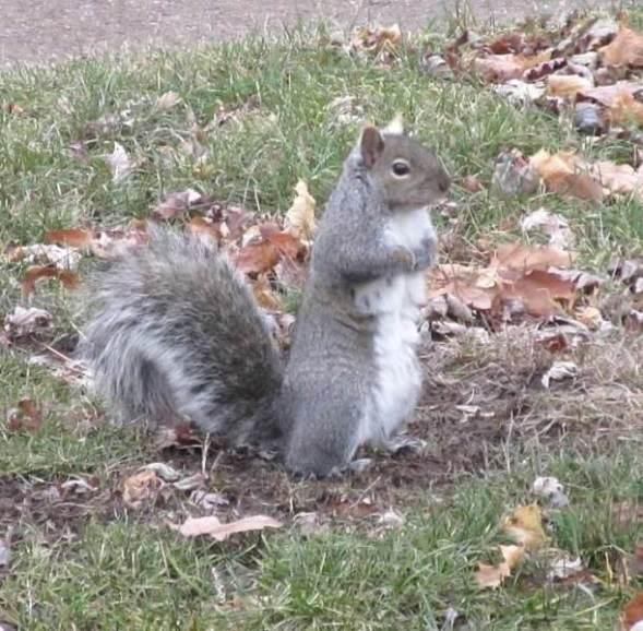 grady in the front yard