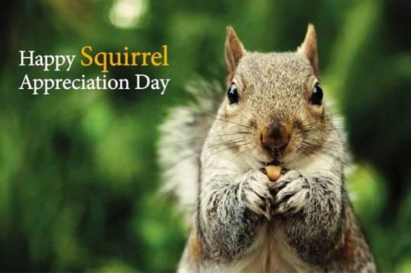 squirrel appreciation day (wild birds unlimited)