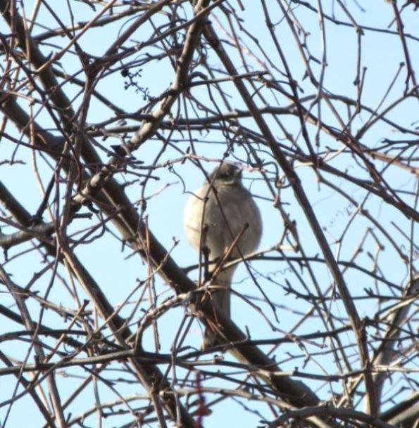 Mystery bird1