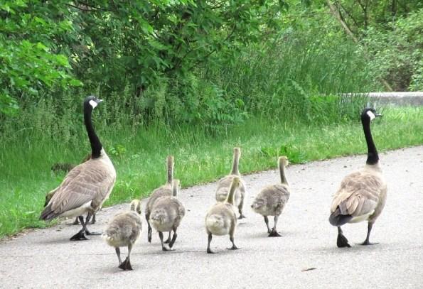 whole-family