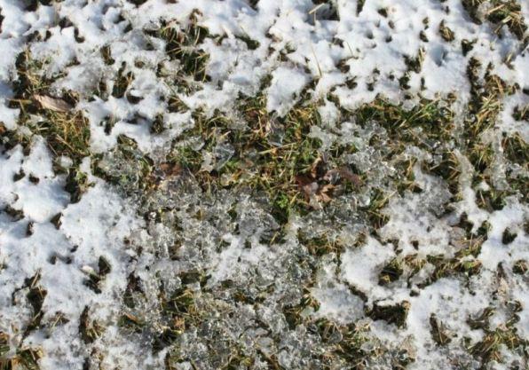 snow dregs