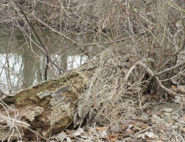 tree decay2